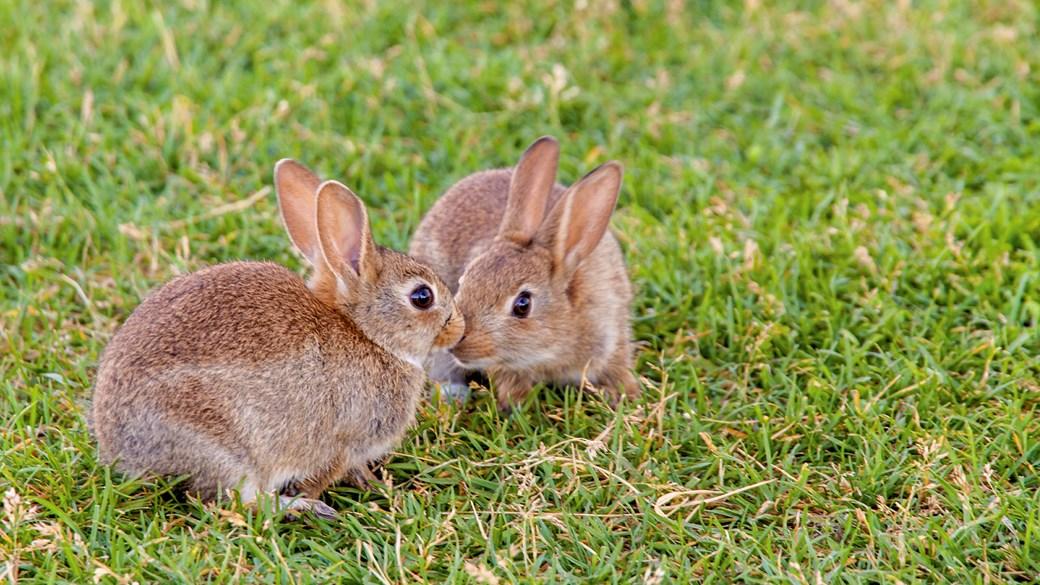 Hình ảnh hai con Thỏ đẹp nhất