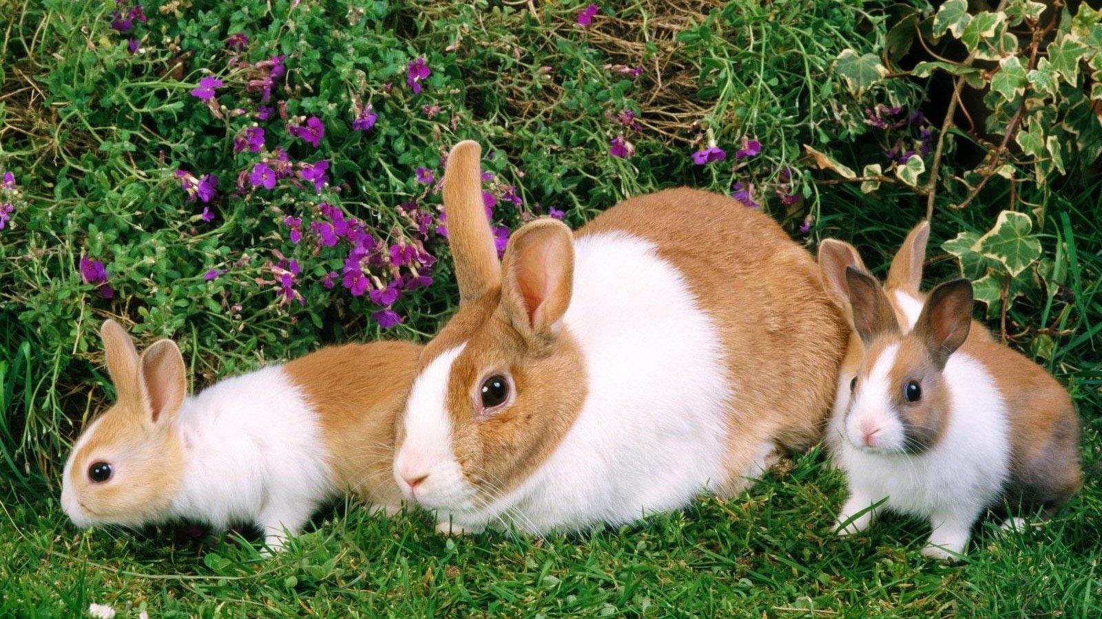 Hình ảnh những chú Thỏ đáng yêu