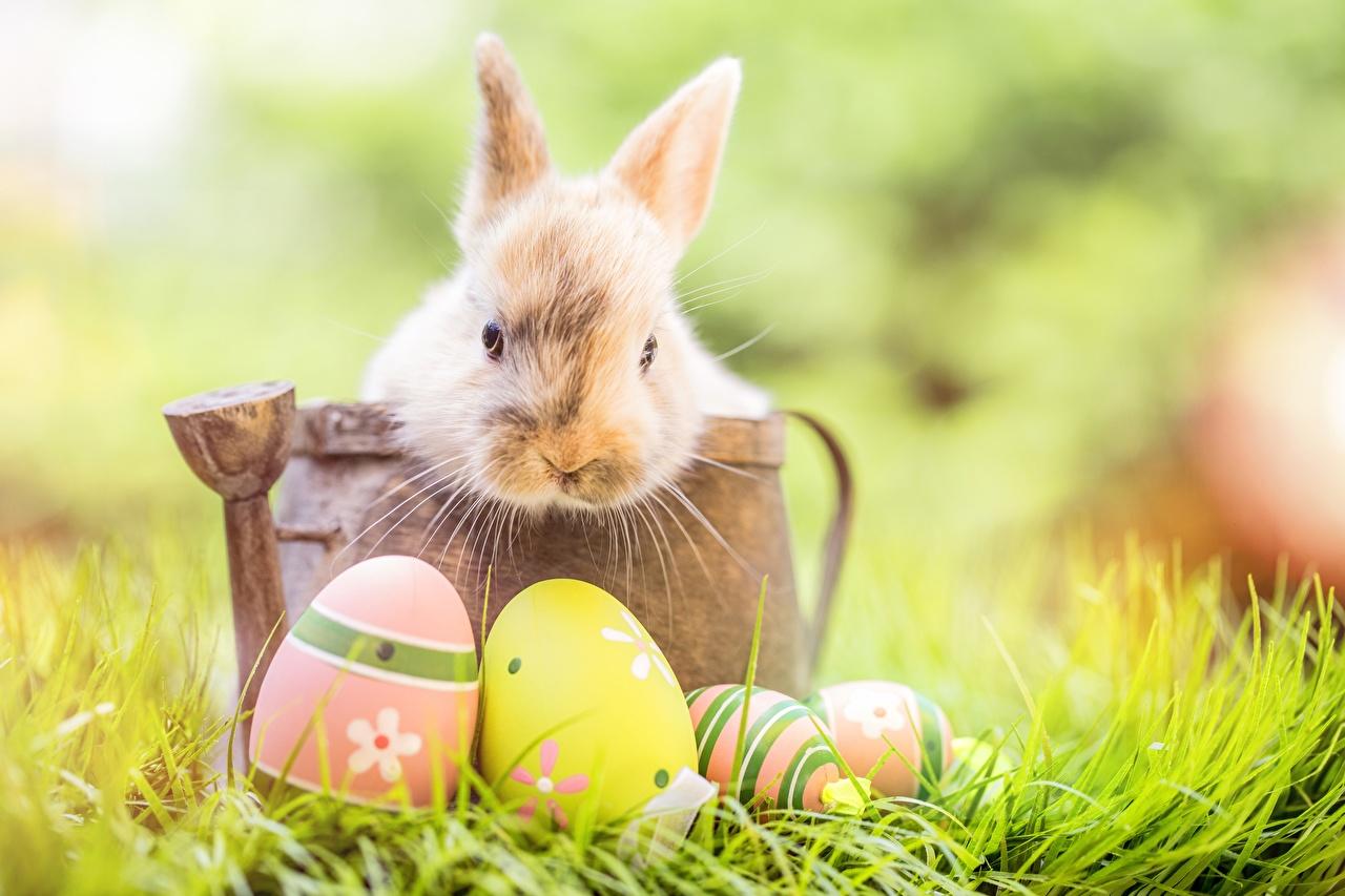 Hình ảnh Thỏ con dễ thương