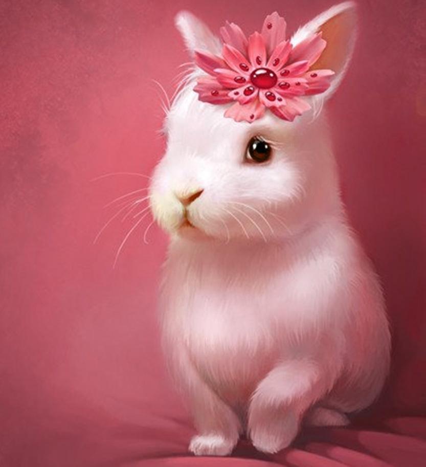 Hình ảnh về con Thỏ