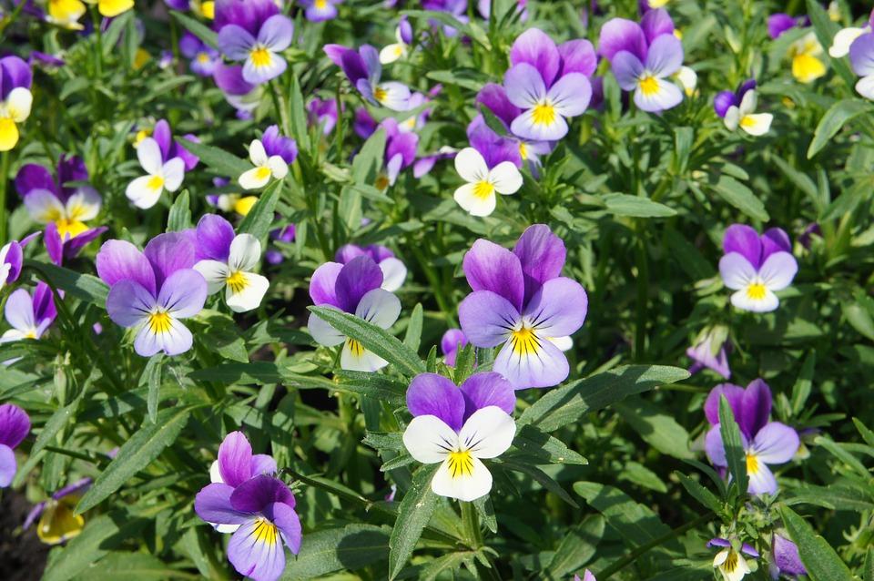 Hình ảnh vườn hoa Phăng đẹp nhất
