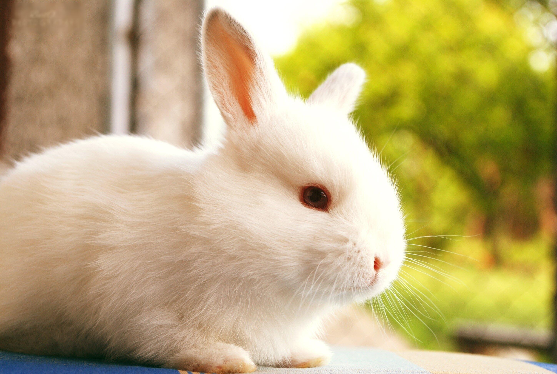 Hình con Thỏ đáng yêu nhất