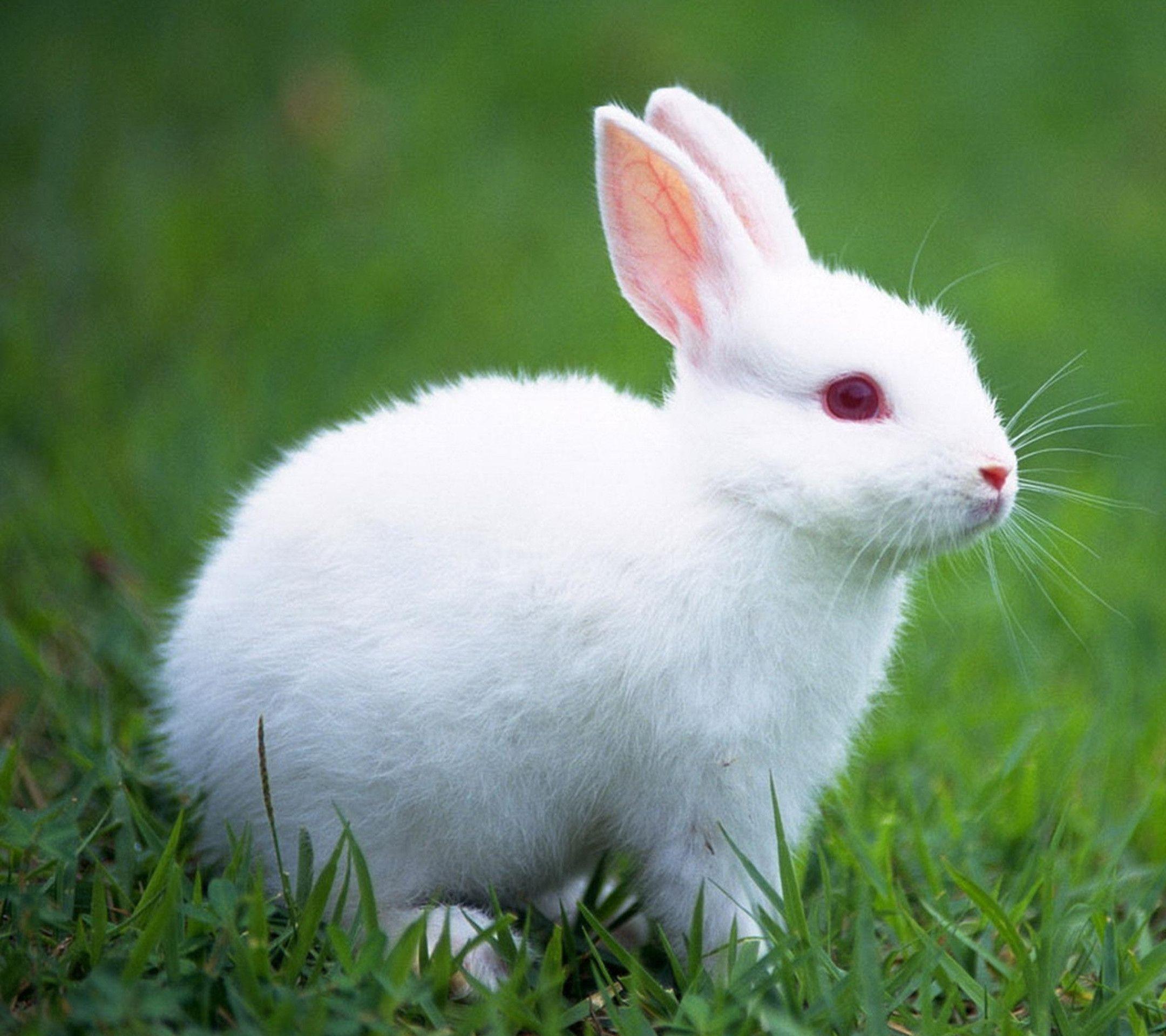 Hình con Thỏ dễ thương nhất