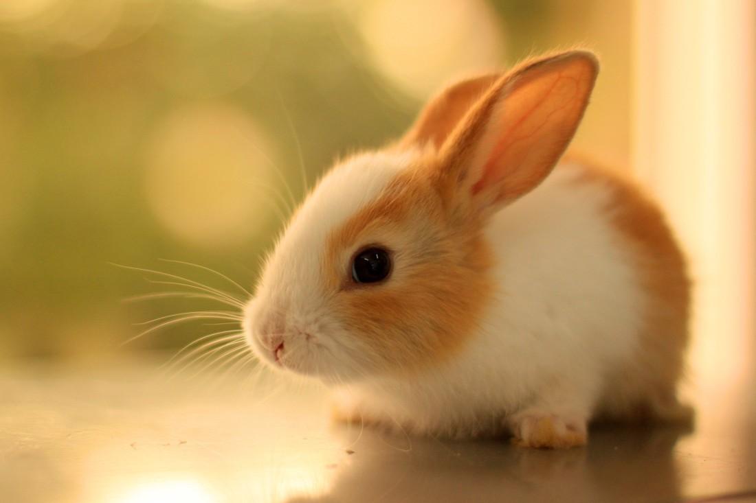 Hình con Thỏ dễ thương