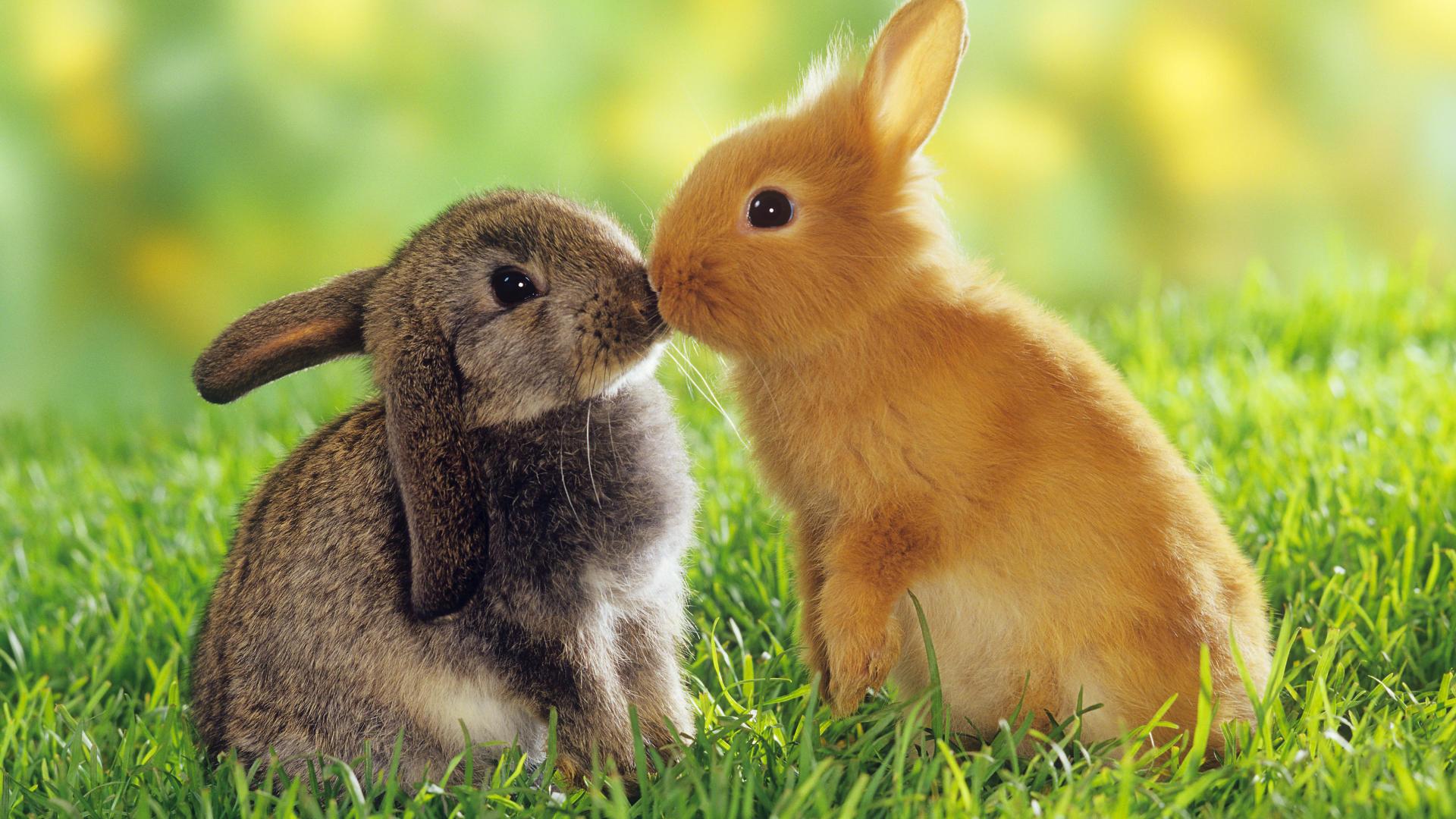Hình con Thỏ đẹp và dễ thương nhất