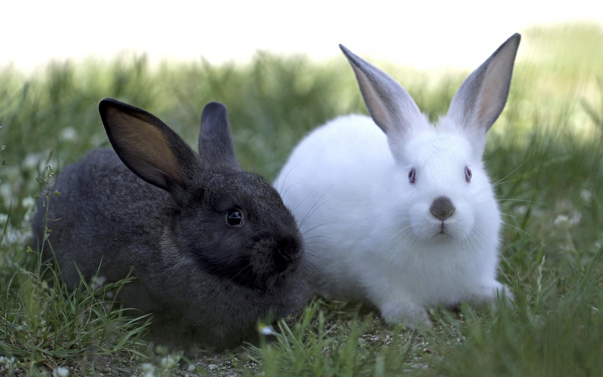 Hình con Thỏ đẹp