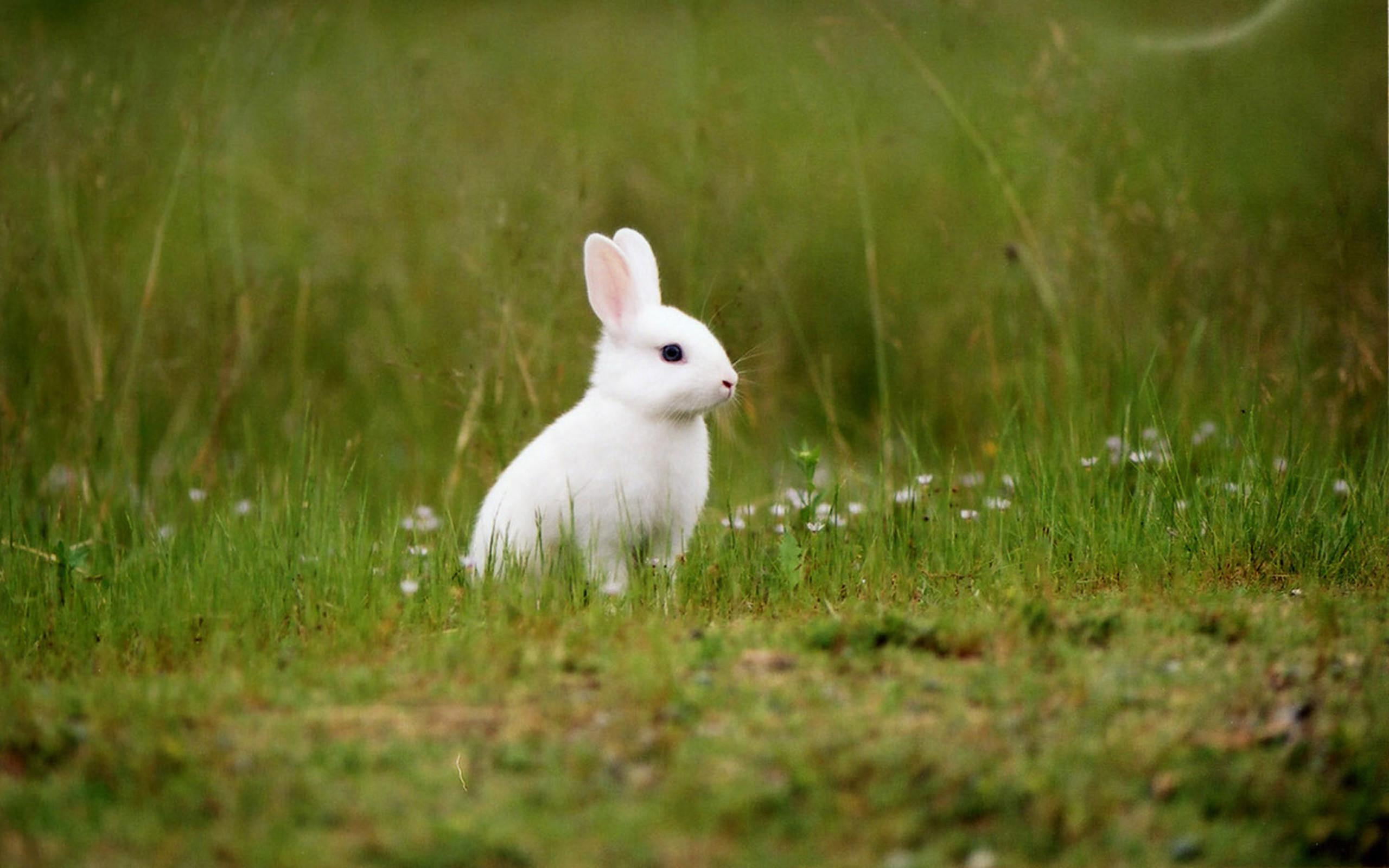 Hình con Thỏ trắng đáng yêu