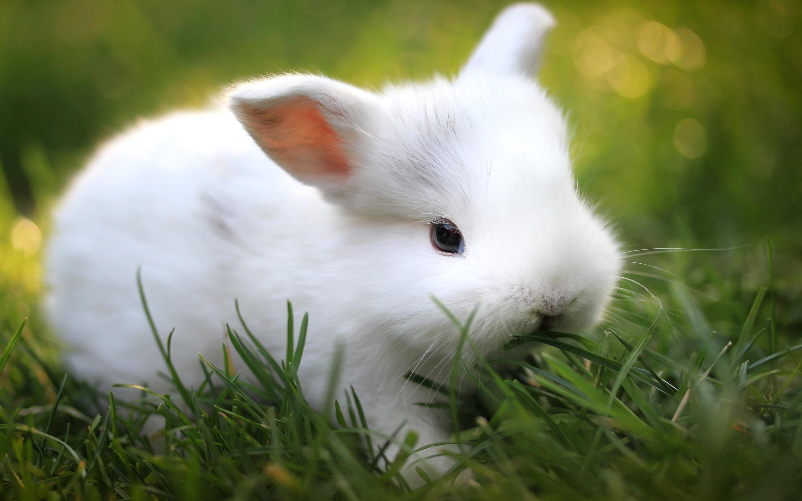 Hình con Thỏ Trắng đẹp