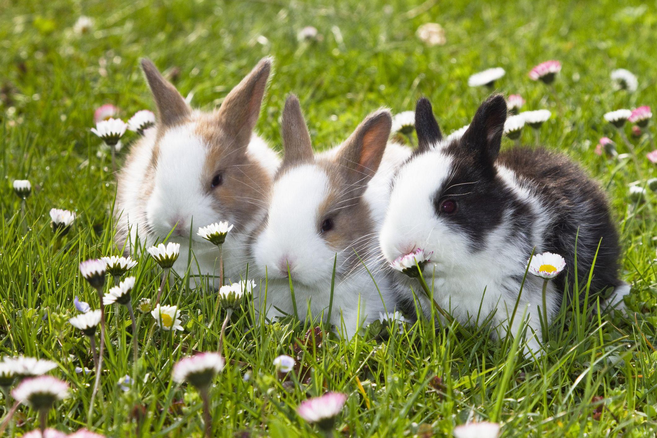 Hình con Thỏ