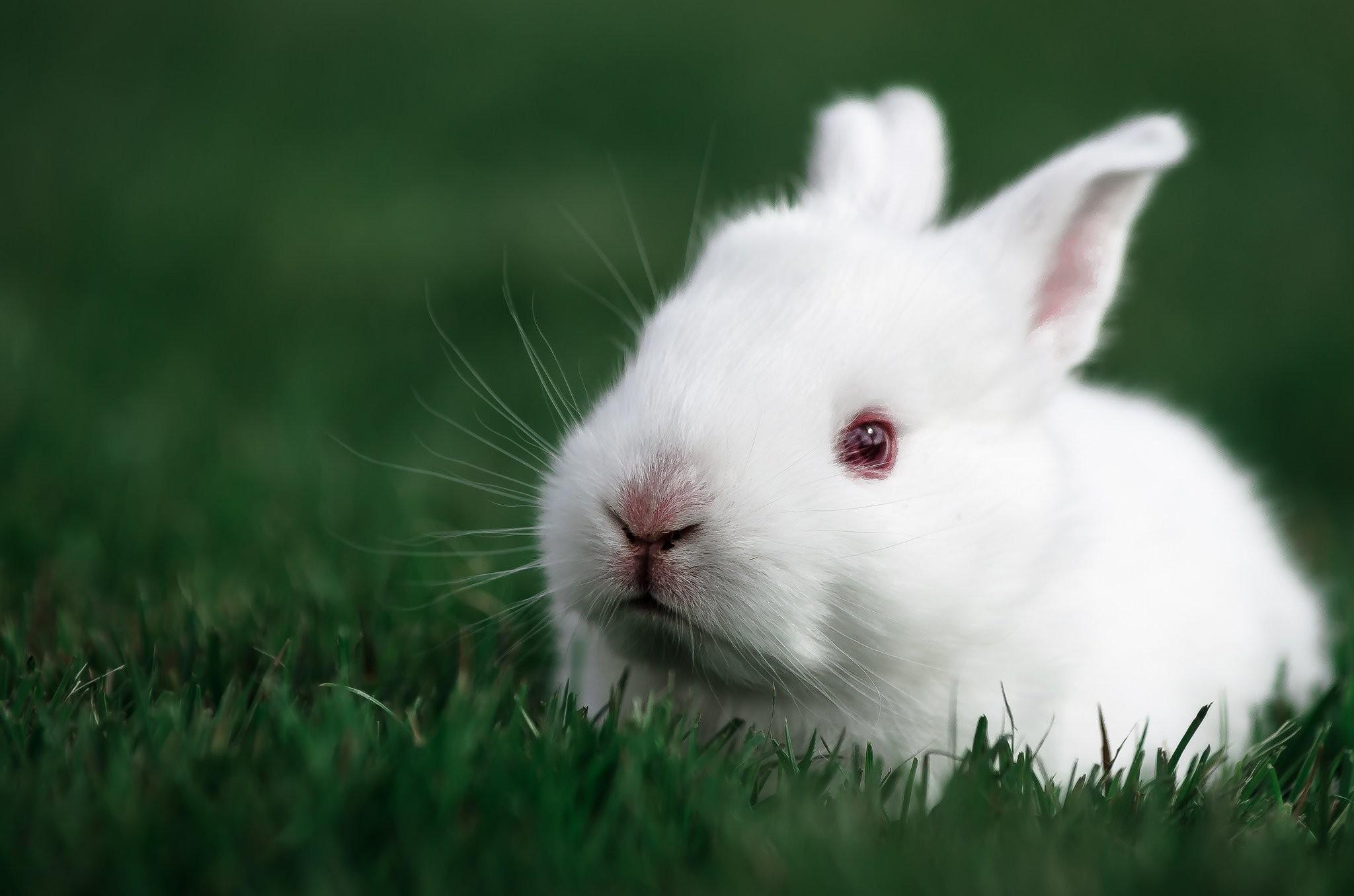 Hình nền con Thỏ dễ thương