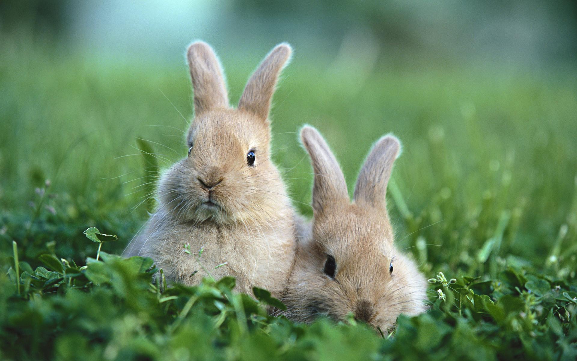 Hình nền con Thỏ đẹp