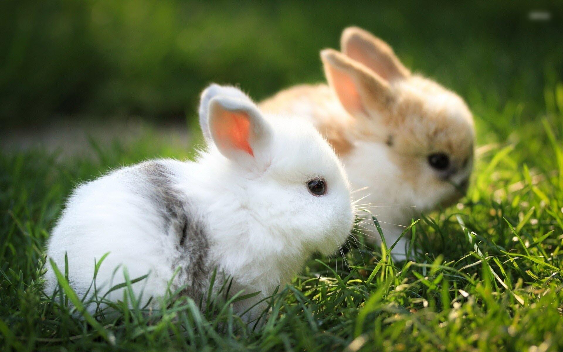 Hình những con Thỏ đẹp nhất