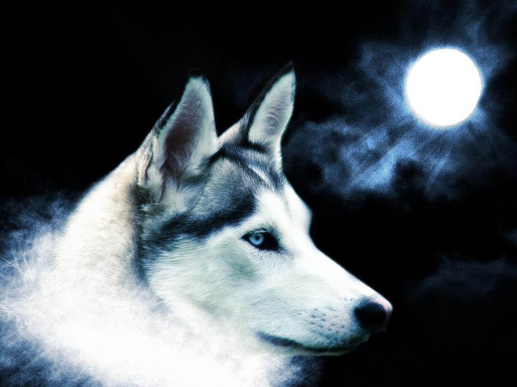 Hình ảnh 3d chó sói đẹp