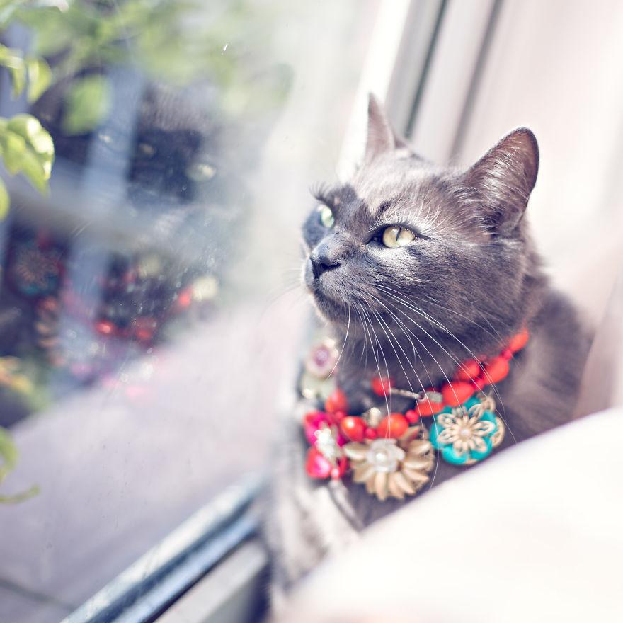 Ảnh chụp mèo đẹp