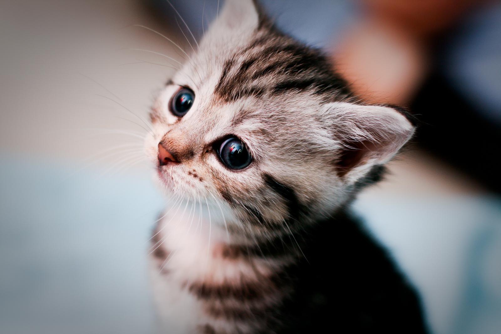 Ảnh mèo đáng yêu nhất