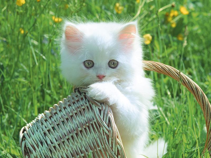 Ảnh mèo dễ thương nhất