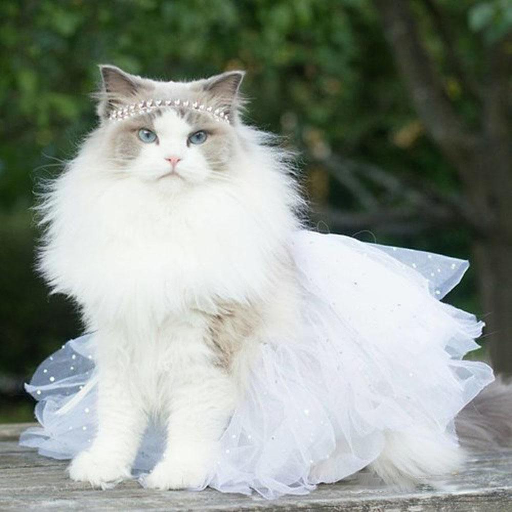 Ảnh mèo hóa trang đẹp
