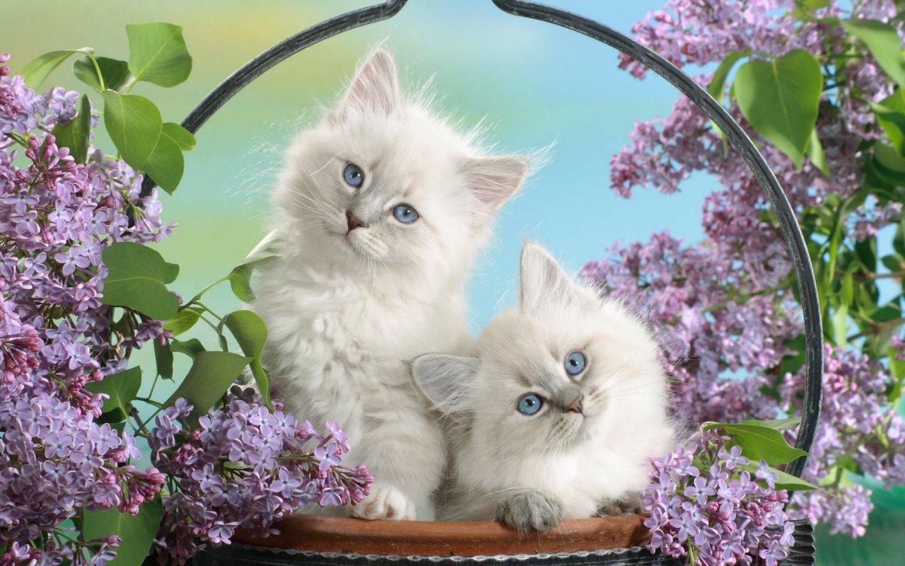 Ảnh những chú mèo đẹp