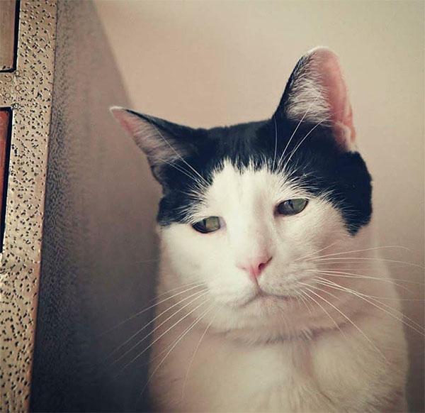 Hình ảnh chú mèo buồn