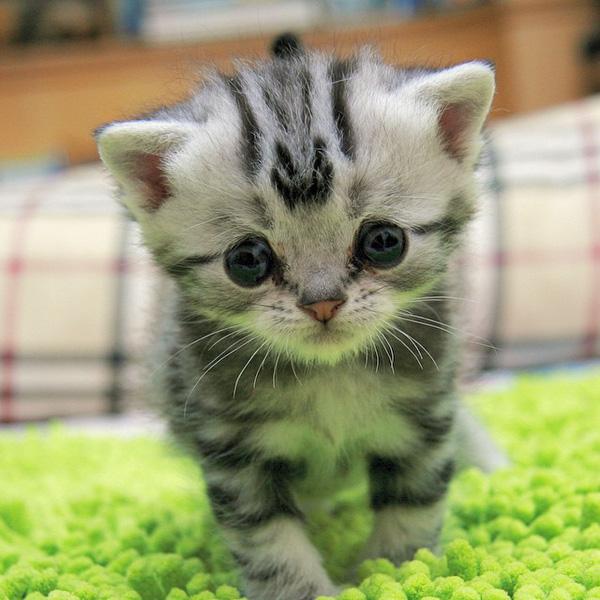 Hình ảnh chú mèo con đáng yêu