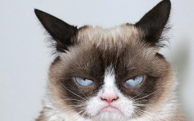 Hình ảnh con mèo dễ thương