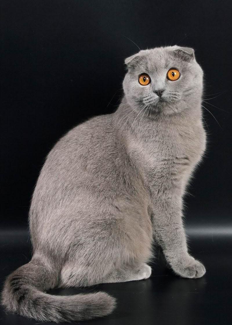 Hình ảnh con mèo đẹp, dễ thương