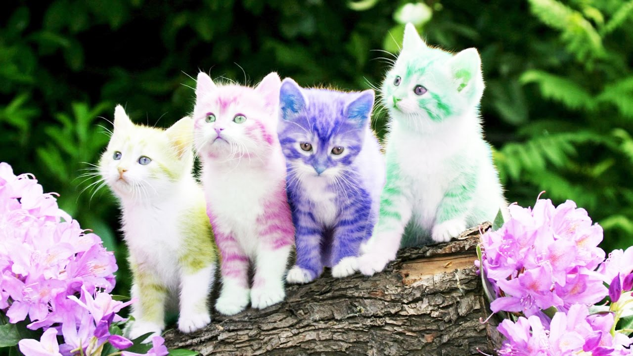 Hình ảnh con mèo đẹp và dễ thương