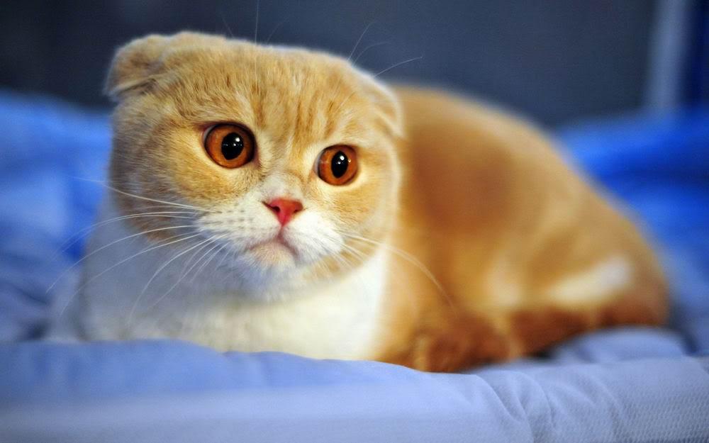 Hình ảnh con mèo đẹp