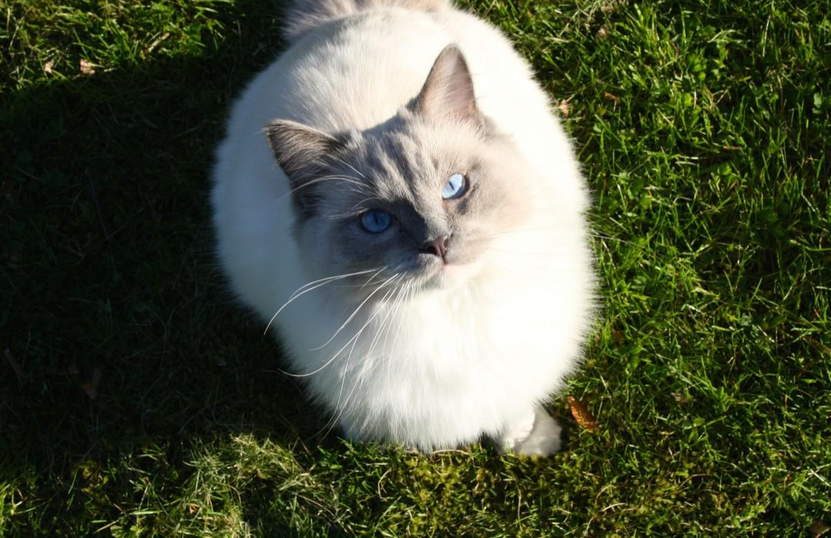 Hình ảnh mèo béo dễ thương