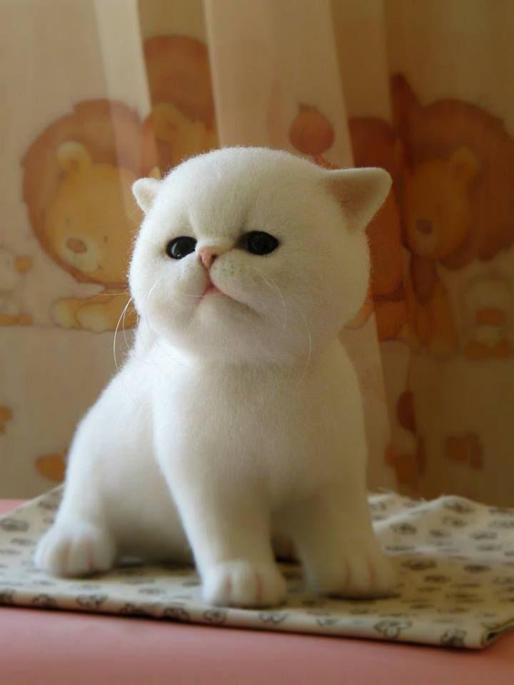 Hình ảnh mèo con đẹp