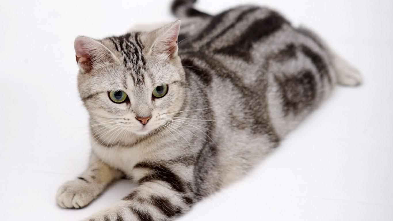 Hình ảnh mèo dễ thương