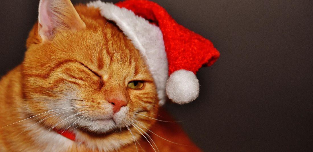 Hình ảnh mèo đẹp, đáng yêu