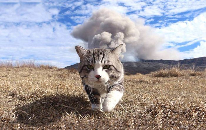 Hình ảnh mèo đẹp và dễ thương