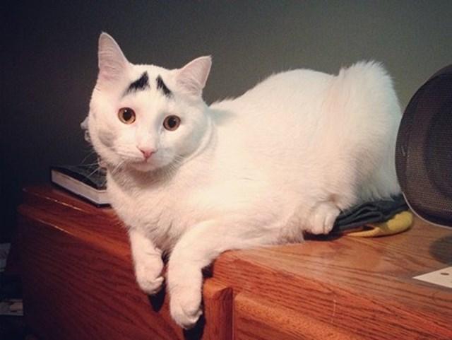 Hình ảnh mèo ngộ nghĩnh và đẹp