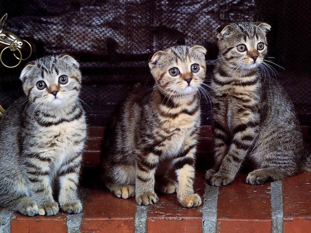 Hình ảnh những con mèo đẹp và dễ thương