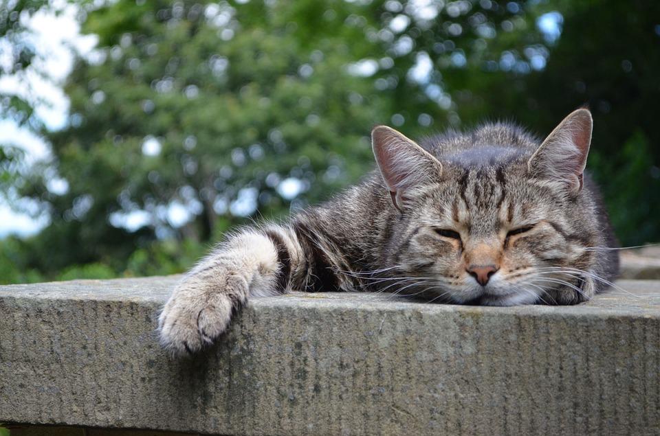Những hình ảnh mèo buồn và đẹp
