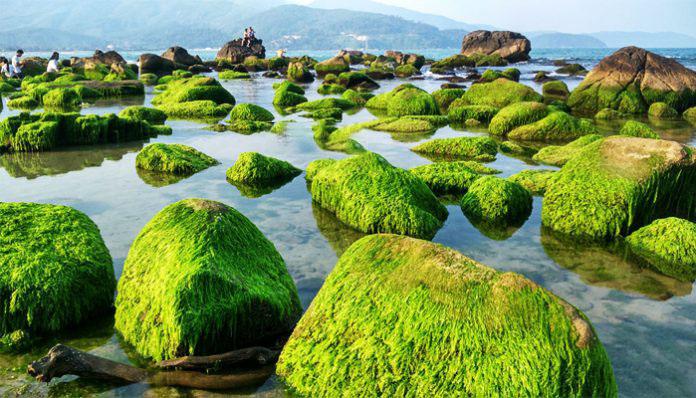 Hình ảnh bãi đá Nam Ô Đà nẵng