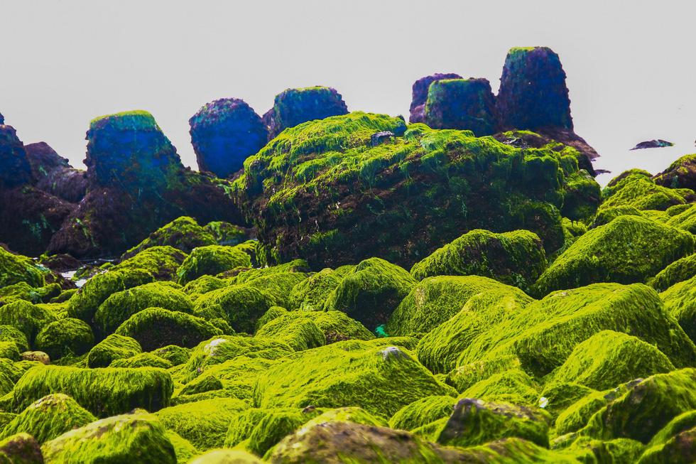 Hình ảnh bãi rêu xanh ở Nha trang