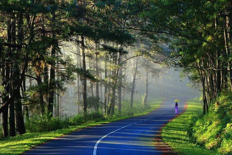 Hình ảnh con đường ở Đà lạt đẹp