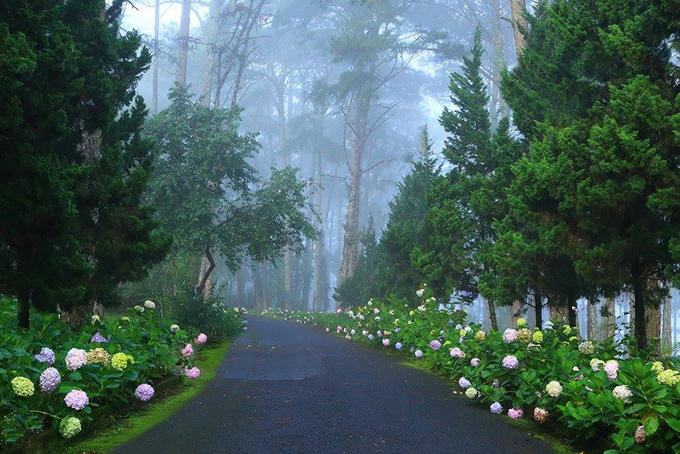 Hình ảnh Đà lạt đẹp mù sương