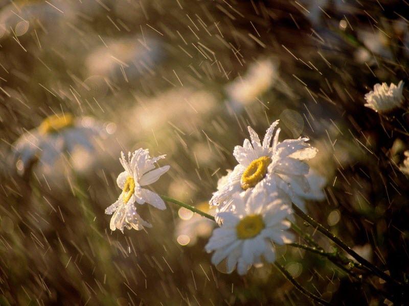 Hình ảnh cơn mưa đẹp