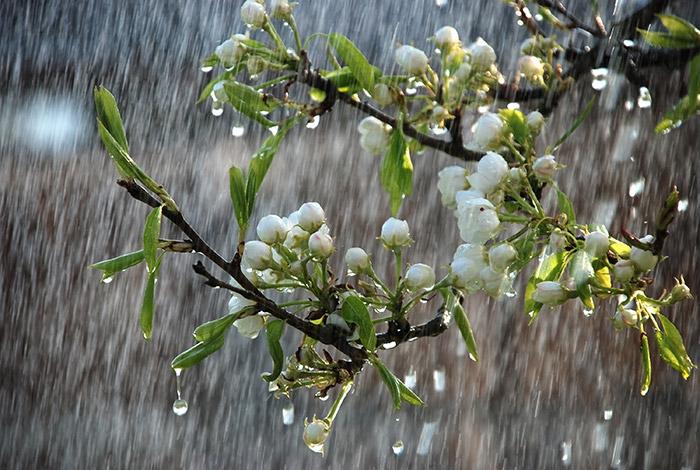 Hình ảnh đẹp và lãng mạn nhất về trời mưa