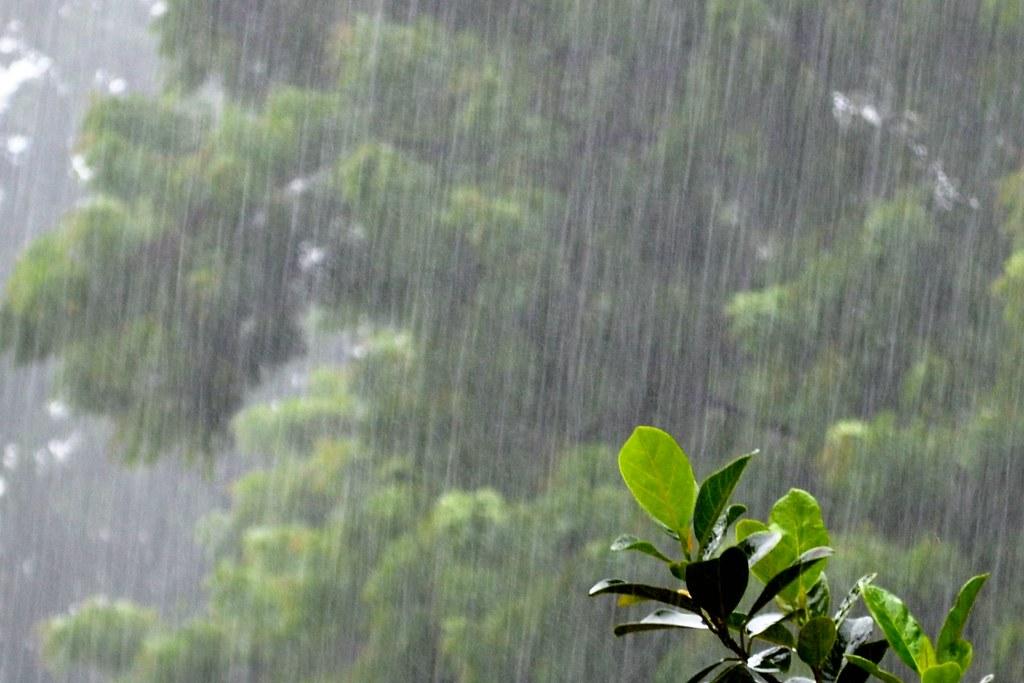 Hình ảnh đẹp về mưa