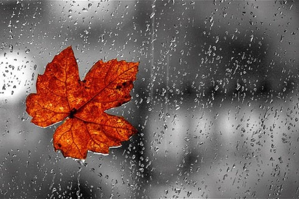 Hình ảnh đẹp về trời mưa