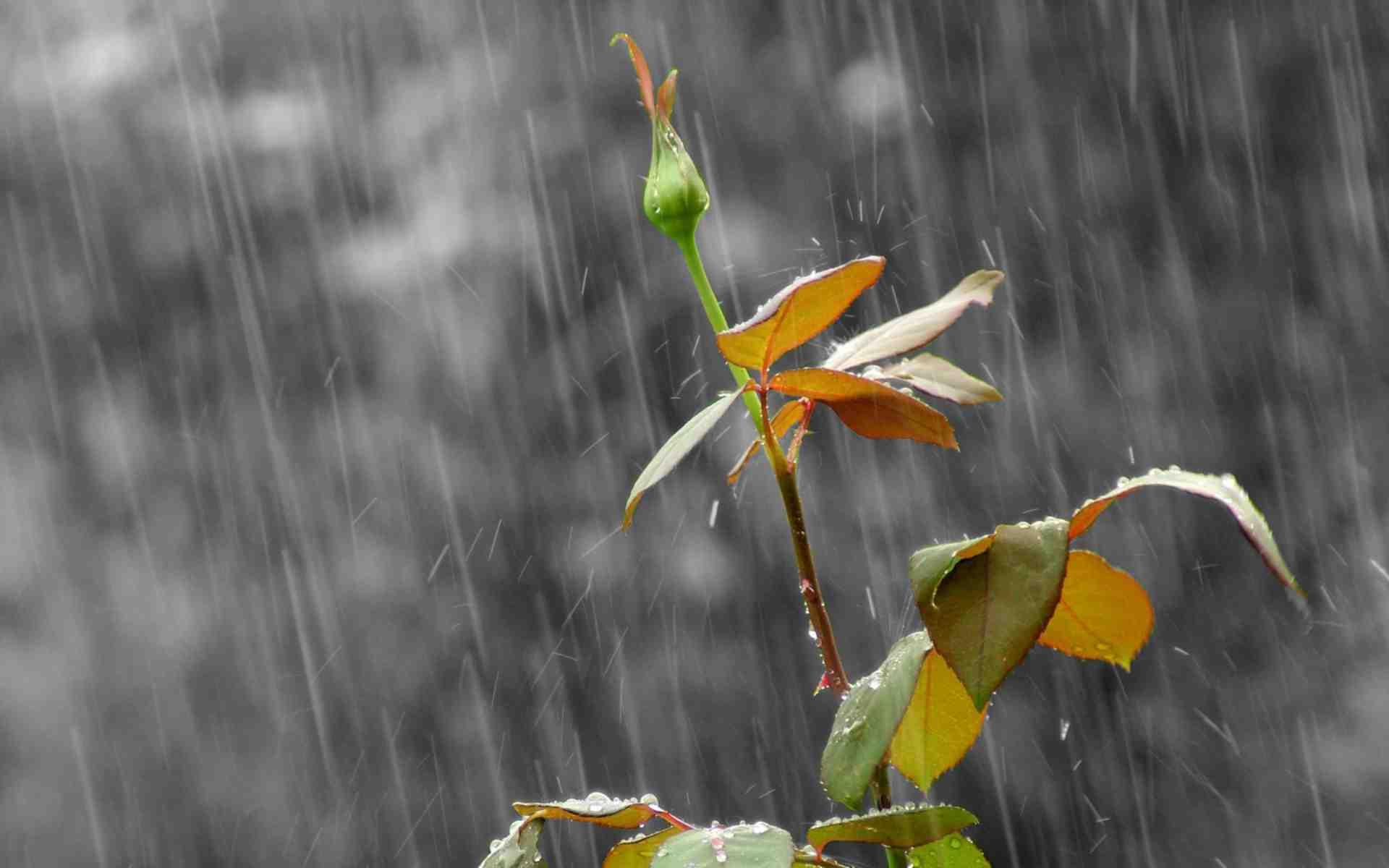 Hình ảnh trời mưa buồn, cô đơn