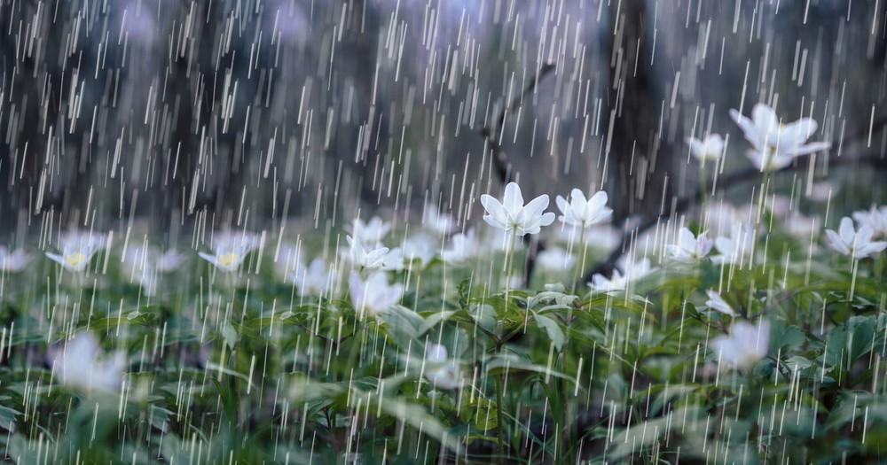 Hình ảnh trời mưa đẹp nhất