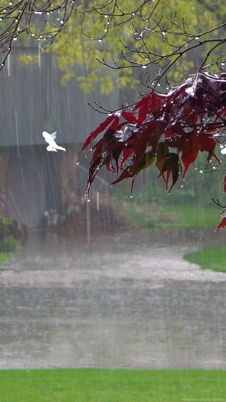 Hình nền trời mưa đẹp