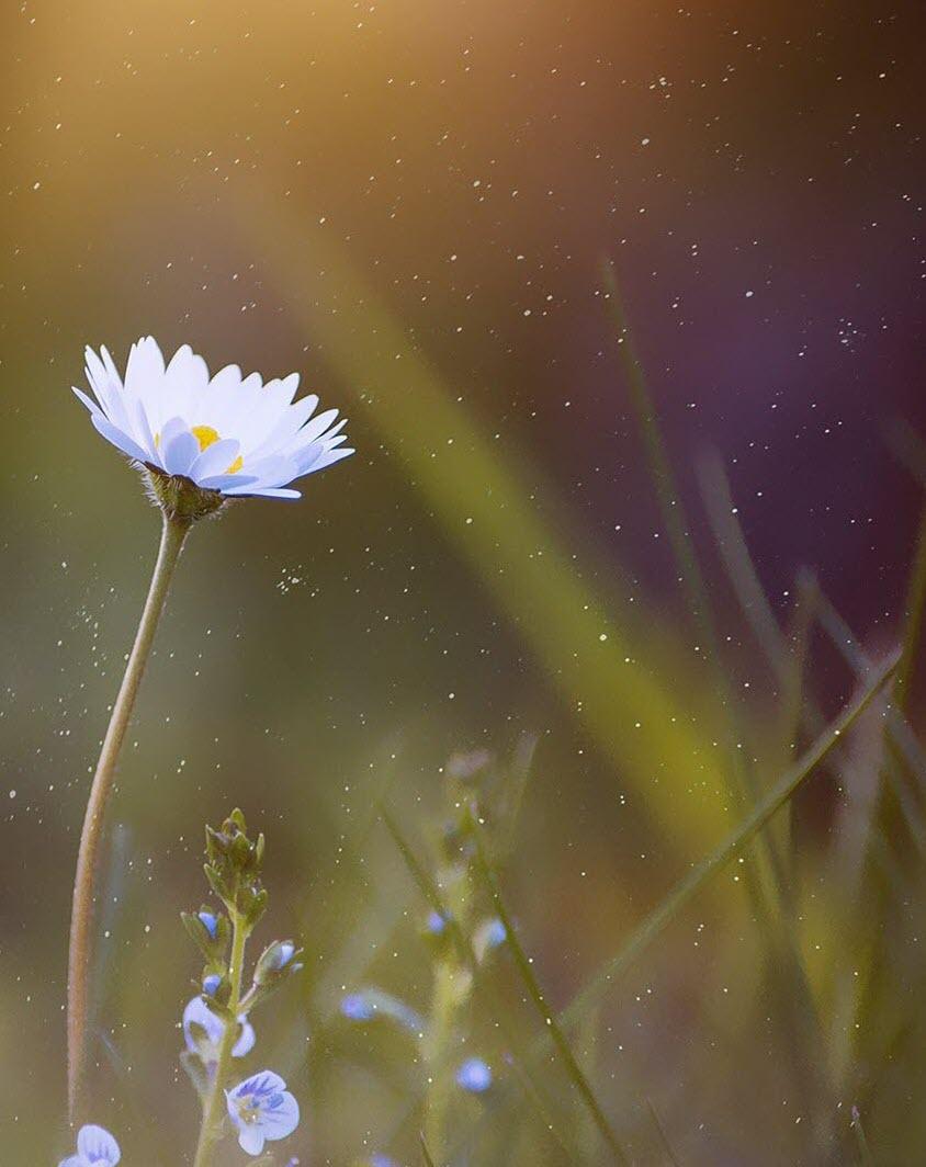 Hình nền hoa cho Word đẹp