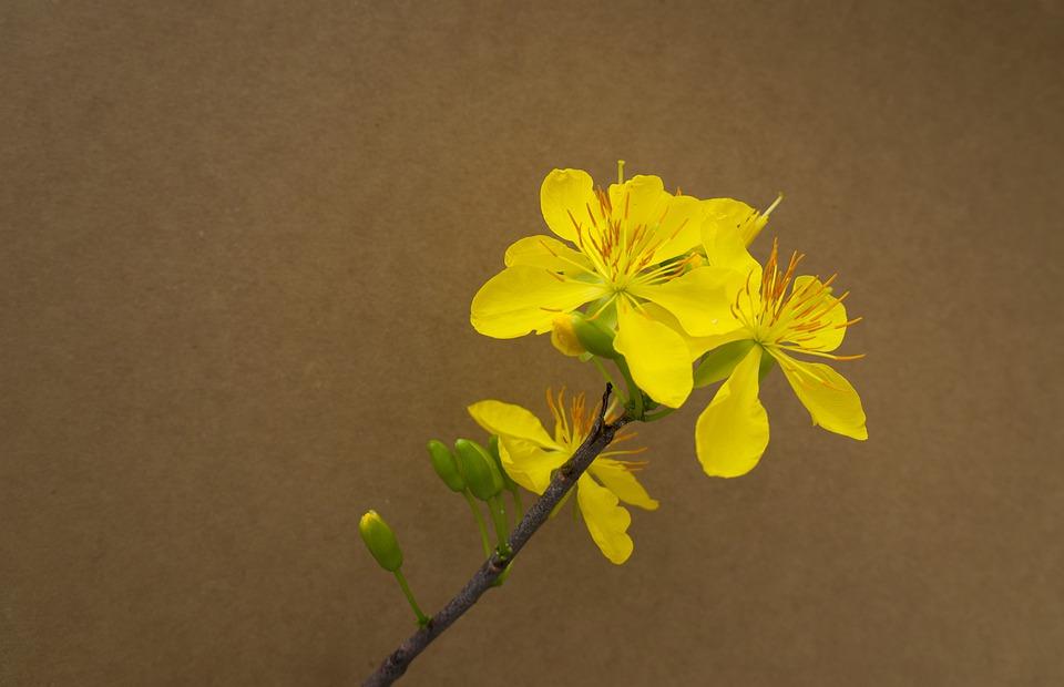 Background hoa mai tết đẹp