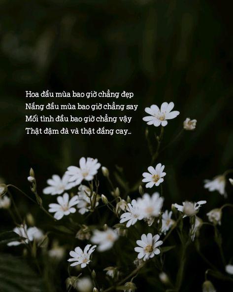 Ảnh quotes thơ
